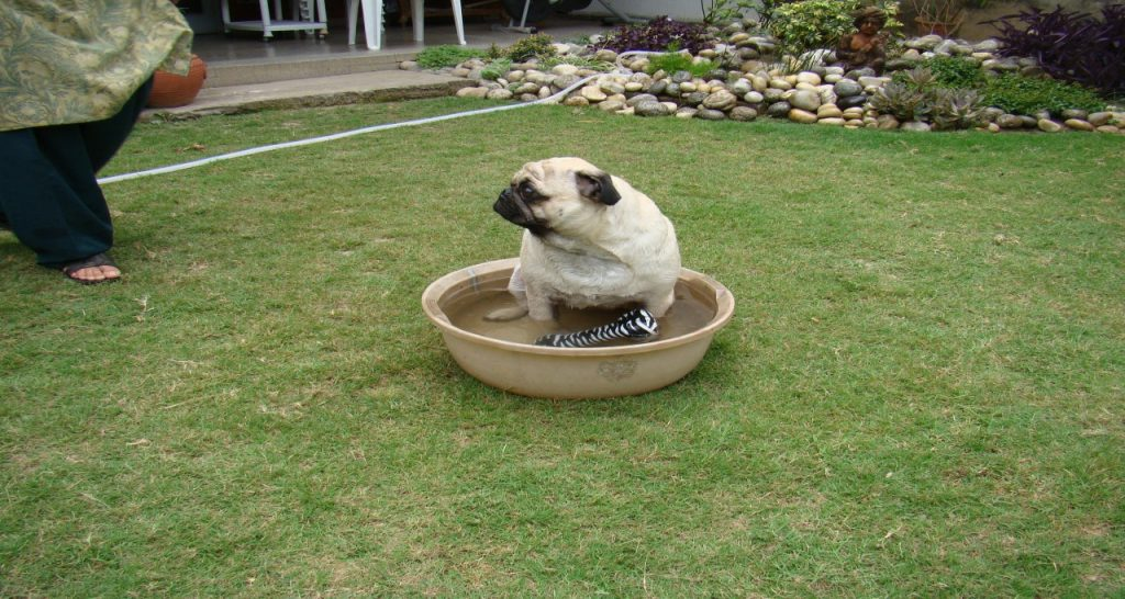 water-tub
